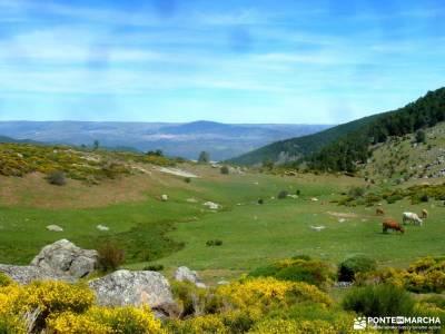 Reserva Natural Valle Iruelas-Pozo de la nieve;las dehesas cercedilla excursiones a cabrera nacimien